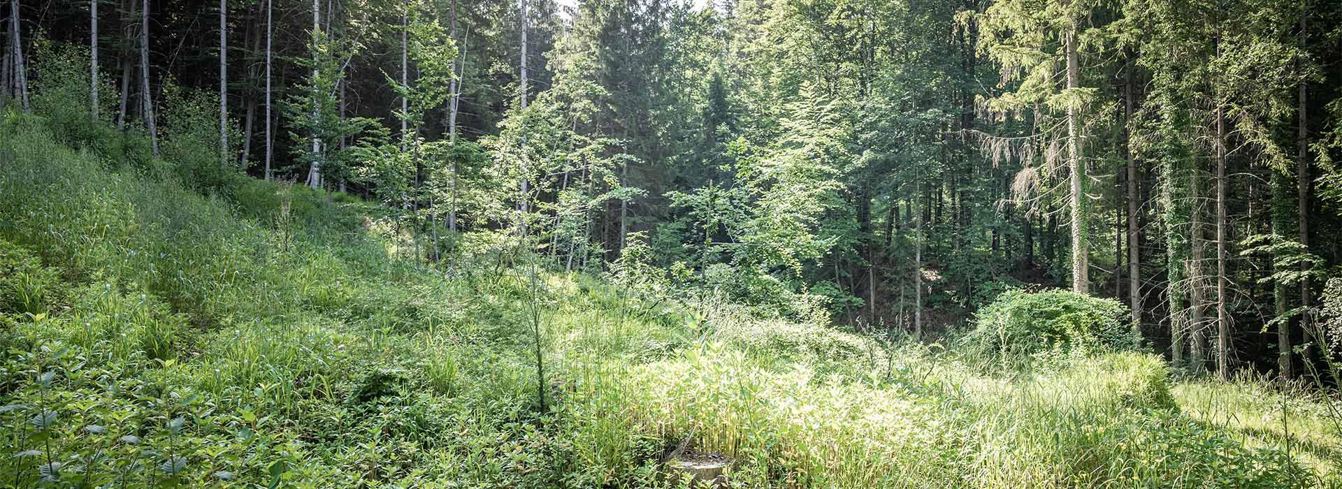 Forstpflege Salzburg Aufforstungsarbeiten Glück Forstservice - Entfernung von Schädlingen
