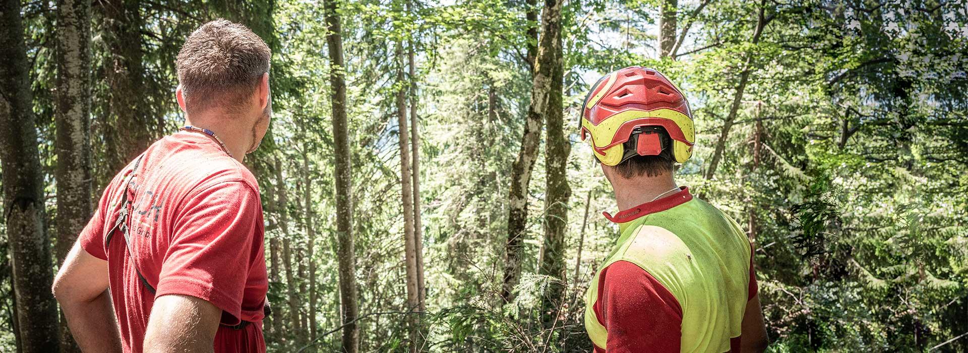 Forstservice HOLZ Glück in Salzburg - Baumschlägerungsunternehmen, Baumfällungen, Rodung, Forstarbeiten, Aufforstung, und Forstpflege - Waldwegebau