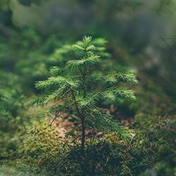 Forstpflege - Aufforstung Salzburg - Glück Holzschlägerungsfirma - Glück Aufforstungsarbeiten